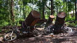 Vụ đốn hạ 15 cây gỗ quý tại VQG Yók Đôn: Đình chỉ 3 cán bộ kiểm lâm