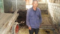 Nông dân phá sản vì nuôi giun