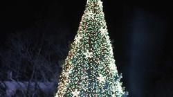 Gia đình Obama thắp sáng cây thông Noel