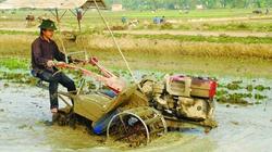 An toàn lao động  trong nông nghiệp bị bỏ ngỏ
