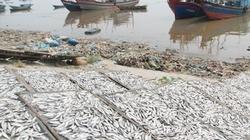 Cá khô chứa hóa chất độc hại ngưỡng cao