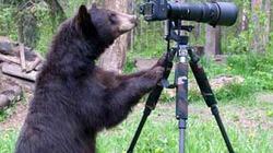 Ảnh đẹp động vật: Gấu làm phó nháy, dê... đi ủng