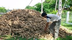 Báo cáo Chính phủ hỗ trợ cứu Nhà máy Cồn Ethanol Đại Tân