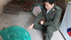 Thanh Hóa: Xe khách vận chuyển rắn cực độc