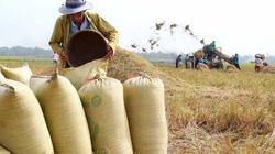 Nông dân tự tạm trữ lúa: Khó quản lý