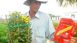 Vật tư nông nghiệp kém chất lượng tràn lan: Nông dân sạt nghiệp