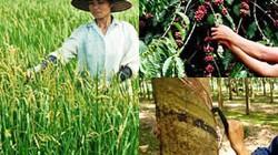 Nông nghiệp xuất siêu tới 10,6 tỷ USD