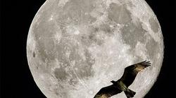 Bất ngờ thấy trăng tròn lần thứ 13 trong năm