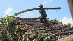Nhà máy đường  đối mặt nguy cơ phá sản