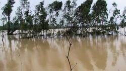 ẢNH HIỆN TRƯỜNG: Vỡ bờ kè hàng trăm nhà dân chìm trong biển nước