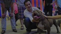 """""""Ngợp"""" với dịch vụ và phụ kiện VIP cho cún tại Dog Show 2013"""