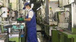 Nối lại thị trường Hàn Quốc: Lao động bắt đầu nản