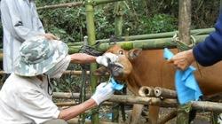 Giúp hộ chăn nuôi phòng bệnh an toàn