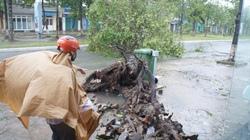 Từ tâm bão Quảng Nam: Nhà bật tung mái, cây rạp trên đường