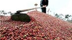 Kiến nghị hoàn thuế VAT cho doanh nghiệp cà phê