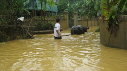 Hỗ trợ khẩn cấp cho người dân vùng lũ Hà Tĩnh