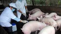 Cấp hóa chất cho Cao Bằng chống dịch bệnh ở lợn