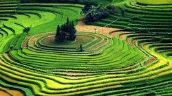Ruộng bậc thang Việt Nam tựa thiên đường hạ giới trên National Geographic