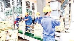 Công ty CP Phân bón Bình Điền: Ra mắt 6 sản phẩm mới