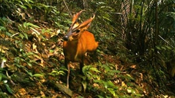 TT-Huế: Phát hiện mang lớn tại Khu bảo tồn Sao La