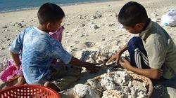 Nhặt đá san hô