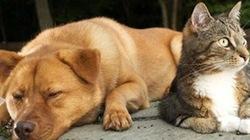 Chó, mèo chết cả loạt nghi do thức ăn Trung Quốc