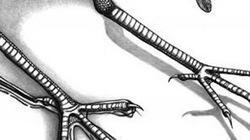 """NÓNG: Phát hiện dấu vết loài """"quái điểu"""" cổ, kỳ bí nhất thế giới"""