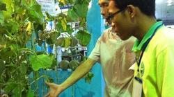 Bội thu nhờ trồng dưa lưới VietGAP