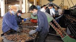 Đồng Nai:  Tuyên dương nông dân trồng điều giỏi