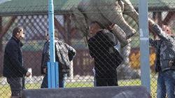 SỐC: Trộm voi, CĐV Ba Lan đối mặt án tù