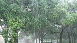 Tiếng mưa