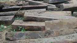 Lâm Đồng: Bị phạt 75 triệu đồng vì khai thác gỗ trái phép
