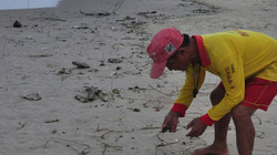 Dầu vón cục đen ngòm trải dài trên bãi biển Đà Nẵng
