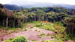 Lâm Đồng: Phát triển Vườn quốc gia Bidoup Núi Bà