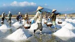 Sản lượng muối cả nước vẫn tăng