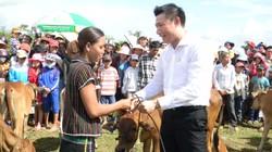 Quảng Nam: Trao tặng bò giống cho nông dân nghèo