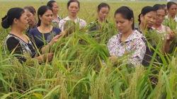 Đi học nghề trồng lúa