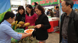 AgroViet 2013:  Rau quả sạch hút hàng