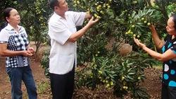 Cách bón phân đa yếu tố NPK Văn Điển hiệu quả cho cây vải thiều