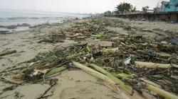 Rác, xác động vật thối rải kín bờ biển Đà Nẵng
