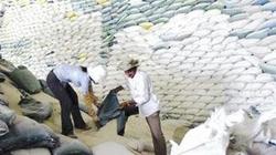 Cạn nguồn cung gạo cho xuất khẩu