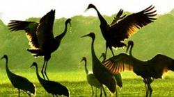 Quy định nuôi, trồng loài được ưu tiên bảo vệ
