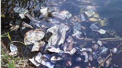 Phát hiện số tiền giấy trị giá 2 tỷ đồng trôi nổi trên sông