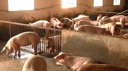 Cao Bằng: Hỗ trợ nông dân chăn nuôi hợp vệ sinh