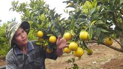 TPP  mang lại cơ hội cho nông nghiệp Việt Nam