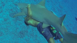 """Bị ném đá vì hành động ngu ngốc trước cá mập """"tử thần"""""""