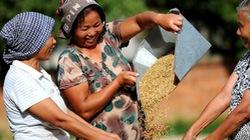 Nông dân Trung Quốc được mùa vụ thu