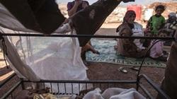 Hơn 11.000 trẻ em bị giết chết ở Syria