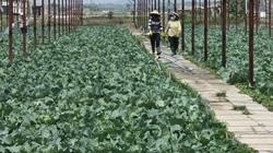 Lâm Đồng: 48 tỷ đồng hỗ trợ sản xuất nông nghiệp