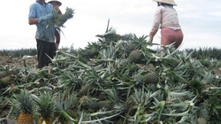 MDEC Vĩnh Long 2013: Hiến kế vì một nền nông nghiệp xanh cho ĐBSCL